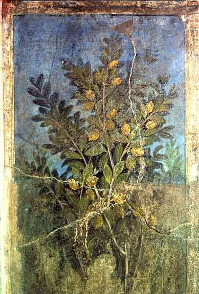 pompei-casa-del-frutteto